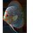 ماهی دیسکس