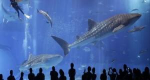 تصاویری بی نظیر از بزرگترین آکواریوم دریایی